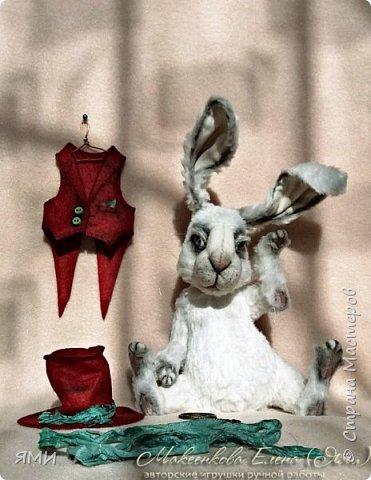 Кроль (тедди) фото 2