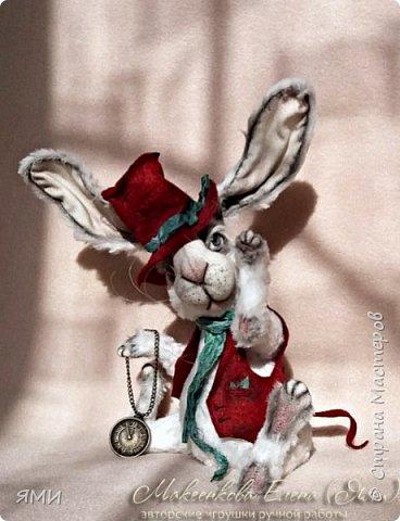 Кроль (тедди) фото 3