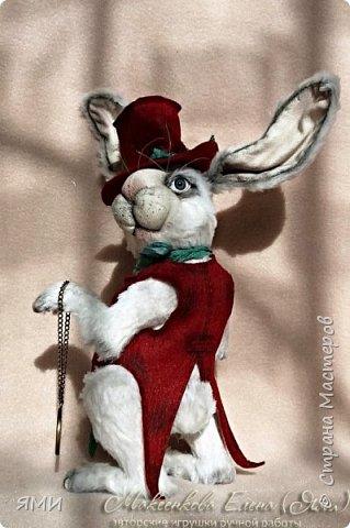 Кроль (тедди) фото 1