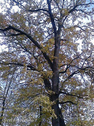 Есть в Краснодаре  замечательное место  - Чистяковская  роща.  Этот забытый  Гулливером зонтик  лежит у входа и ждет своего хозяина.  фото 2