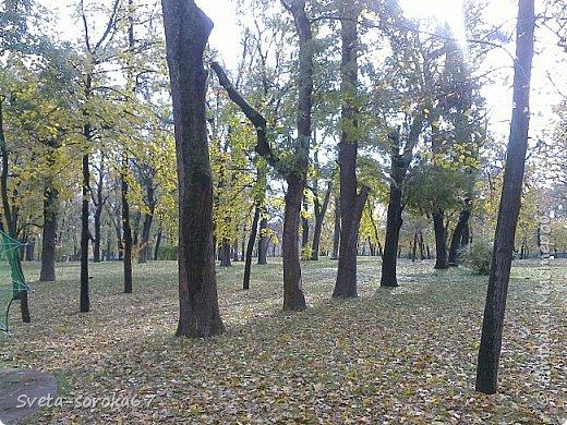 Есть в Краснодаре  замечательное место  - Чистяковская  роща.  Этот забытый  Гулливером зонтик  лежит у входа и ждет своего хозяина.  фото 3