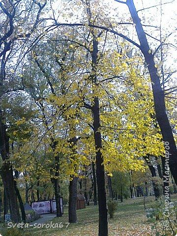 Есть в Краснодаре  замечательное место  - Чистяковская  роща.  Этот забытый  Гулливером зонтик  лежит у входа и ждет своего хозяина.  фото 4