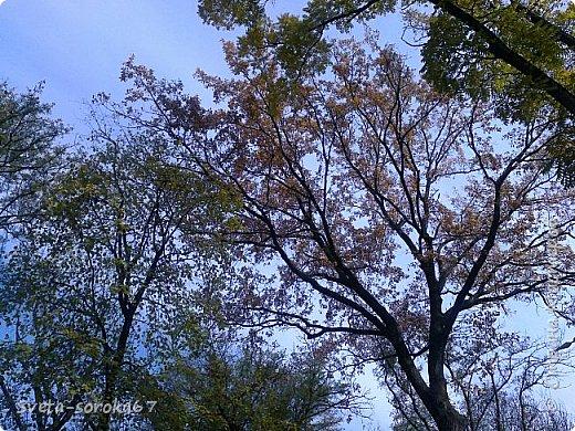 Есть в Краснодаре  замечательное место  - Чистяковская  роща.  Этот забытый  Гулливером зонтик  лежит у входа и ждет своего хозяина.  фото 14