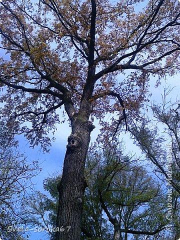 Есть в Краснодаре  замечательное место  - Чистяковская  роща.  Этот забытый  Гулливером зонтик  лежит у входа и ждет своего хозяина.  фото 15
