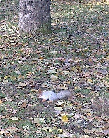 Есть в Краснодаре  замечательное место  - Чистяковская  роща.  Этот забытый  Гулливером зонтик  лежит у входа и ждет своего хозяина.  фото 18
