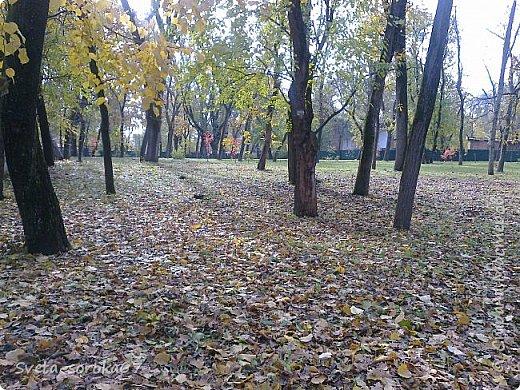 Есть в Краснодаре  замечательное место  - Чистяковская  роща.  Этот забытый  Гулливером зонтик  лежит у входа и ждет своего хозяина.  фото 20