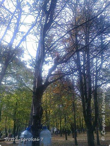 Есть в Краснодаре  замечательное место  - Чистяковская  роща.  Этот забытый  Гулливером зонтик  лежит у входа и ждет своего хозяина.  фото 33