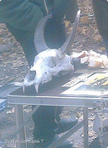 Есть в Краснодаре  замечательное место  - Чистяковская  роща.  Этот забытый  Гулливером зонтик  лежит у входа и ждет своего хозяина.  фото 27