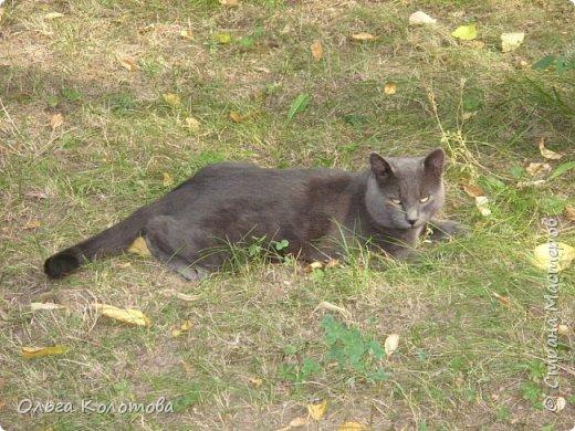 Бухарест. В этнографическом парке Румынская деревня, где собраны образцы домов из разных районов страны. А еще там много кошек, и все откормленные! Вместо экспонатов я снимала там кошек...  Серьезный кот. фото 2