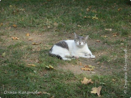 Бухарест. В этнографическом парке Румынская деревня, где собраны образцы домов из разных районов страны. А еще там много кошек, и все откормленные! Вместо экспонатов я снимала там кошек...  Серьезный кот. фото 9