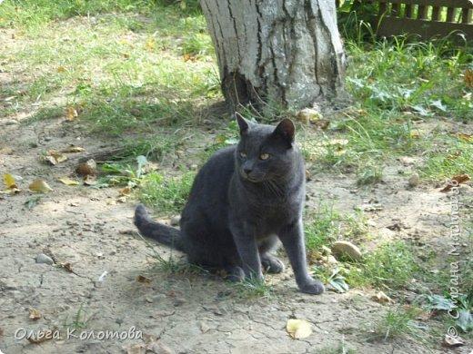 Бухарест. В этнографическом парке Румынская деревня, где собраны образцы домов из разных районов страны. А еще там много кошек, и все откормленные! Вместо экспонатов я снимала там кошек...  Серьезный кот. фото 1