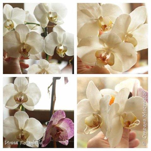 Наконец- то исполнилась моя давняя мечта- освоить фаленопсис! И хоть есть еще над чем работать,но,надеюсь,что я стала намного ближе к цели) Пока налепила цветы,оформлять в ветку буду позже,когда прийдет вайнер листика фаленопсиса. И как всегда,делюсь с вами моим скромным опытом по созданию этого цветочка)  фото 27