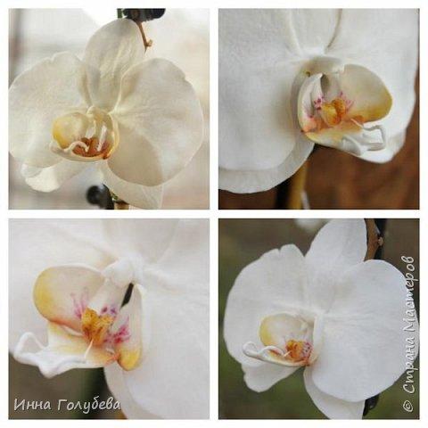 Наконец- то исполнилась моя давняя мечта- освоить фаленопсис! И хоть есть еще над чем работать,но,надеюсь,что я стала намного ближе к цели) Пока налепила цветы,оформлять в ветку буду позже,когда прийдет вайнер листика фаленопсиса. И как всегда,делюсь с вами моим скромным опытом по созданию этого цветочка)  фото 28