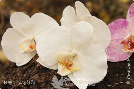 Наконец- то исполнилась моя давняя мечта- освоить фаленопсис! И хоть есть еще над чем работать,но,надеюсь,что я стала намного ближе к цели) Пока налепила цветы,оформлять в ветку буду позже,когда прийдет вайнер листика фаленопсиса. И как всегда,делюсь с вами моим скромным опытом по созданию этого цветочка)  фото 30