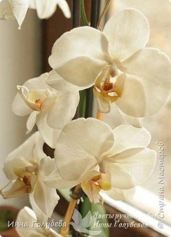 Наконец- то исполнилась моя давняя мечта- освоить фаленопсис! И хоть есть еще над чем работать,но,надеюсь,что я стала намного ближе к цели) Пока налепила цветы,оформлять в ветку буду позже,когда прийдет вайнер листика фаленопсиса. И как всегда,делюсь с вами моим скромным опытом по созданию этого цветочка)  фото 31