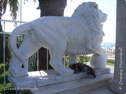 Набережная Сиде, Турция. Кот отдыхает в тени льва. фото 3