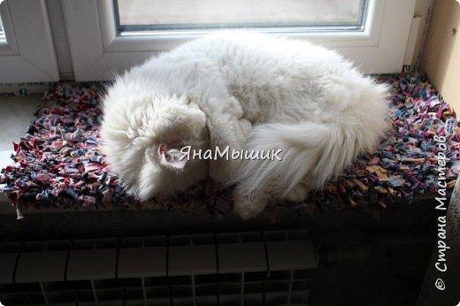 Здравствуйте, уважаемые соседи!  Наш кот, как и все котики, любит спать на подоконнике, в связи с чем ему приходилось стелить различные покрывала. Глядя на залежи не подлежащих ремонту носков я решила, что будет у кота собственный коврик! Использованные материалы:  1. Тонкие трикотажные носки; 2. Крупноячеистая сетка из строительного магазина; 3. Ножницы.  фото 8
