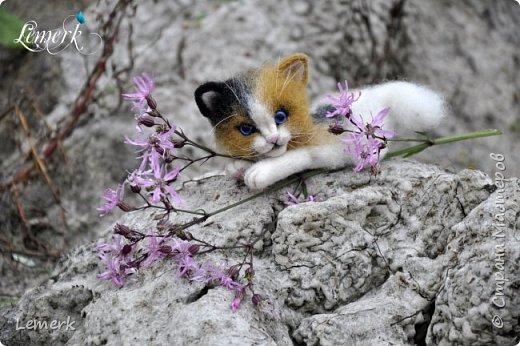 Арахис. Валяный трехцветный котенок  фото 2