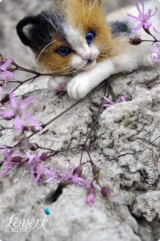 Арахис. Валяный трехцветный котенок  фото 3