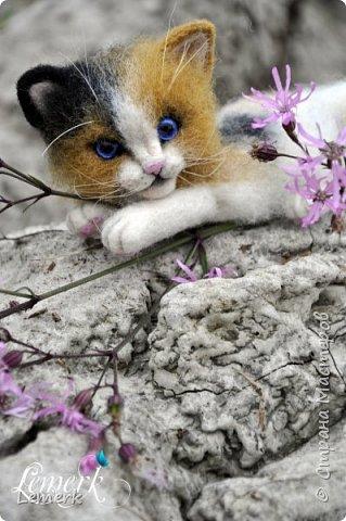 Арахис. Валяный трехцветный котенок  фото 4