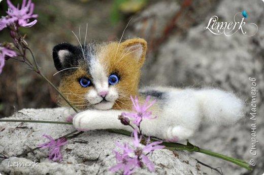 Арахис. Валяный трехцветный котенок  фото 1