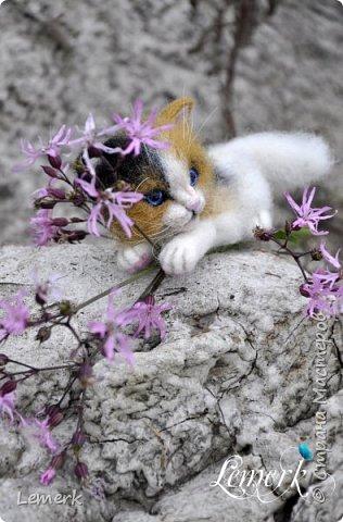 Арахис. Валяный трехцветный котенок  фото 6