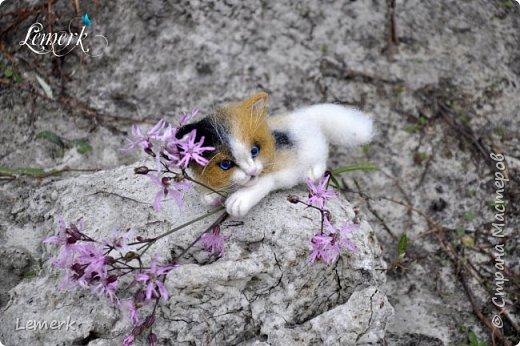 Арахис. Валяный трехцветный котенок  фото 7