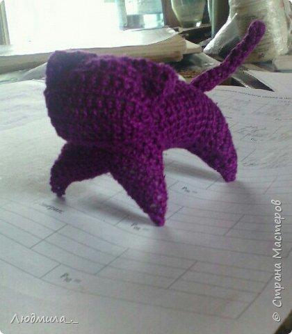 Фиолетовый кот