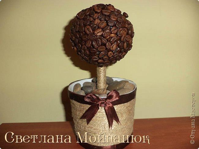 Кофейное дерево.
