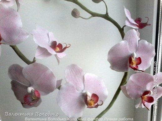 Здравствуйте дорогие мастера и мастерицы!!!!Уже делала такую орхидейку, но попросили слепить еще ,как же отказать.Ну  и как обычно и вам решила показать. фото 1