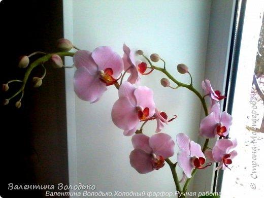 Здравствуйте дорогие мастера и мастерицы!!!!Уже делала такую орхидейку, но попросили слепить еще ,как же отказать.Ну  и как обычно и вам решила показать. фото 4