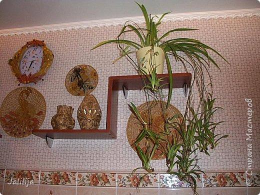 Здравствуйте! Короткое дополнение к материалу, который я показывала весной. Речь шла о  декорировании кухонной стены. Тогда я посетовала, что не хватает комнатных цветов. За лето  я вырастила для этой кухни хлорофитум, самые кухонные цветы. фото 4