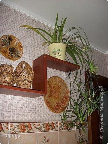 Здравствуйте! Короткое дополнение к материалу, который я показывала весной. Речь шла о  декорировании кухонной стены. Тогда я посетовала, что не хватает комнатных цветов. За лето  я вырастила для этой кухни хлорофитум, самые кухонные цветы. фото 5