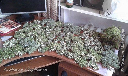 Мои топиарии , бонсайчики , впрочем как кто называет .  Исландский мох , ну или как в народе - лишайник . При попадании влаги мох открывается и становится зелененьким . 1 фото полито из пульверизатора .  фото 4