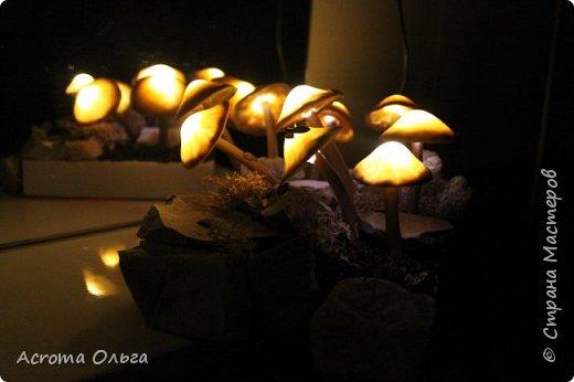 Сегодня хочу поделиться вот таким ночничком. Поганки слеплены из полимерной глины, внутри спрятаны светодиоды. Можно сказать, что это коллективное творчество: электрическую начинку паяли вместе с мужем, камушки собирали с дочкой, ягель настоящий привезла мне подруга из-за полярного круга. Сбоку на подставке установлен датчик освещенности, в темноте грибы начинают светиться и мерцать фото 10