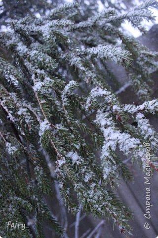 Эх,вот и наступила долгожданная зима!!! Снег застал врасплох...после дождей и слякоти наступила самая настоящая сказка)))) фото 5