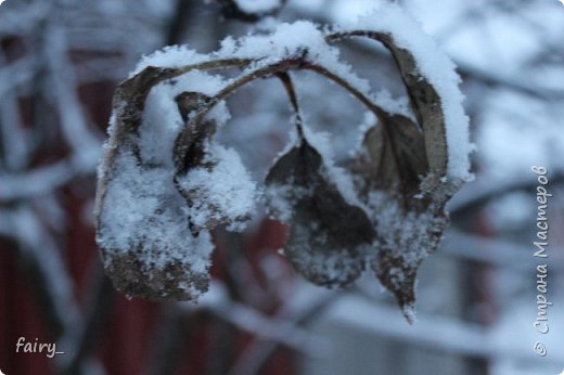 Эх,вот и наступила долгожданная зима!!! Снег застал врасплох...после дождей и слякоти наступила самая настоящая сказка)))) фото 6