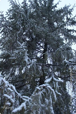 Эх,вот и наступила долгожданная зима!!! Снег застал врасплох...после дождей и слякоти наступила самая настоящая сказка)))) фото 12