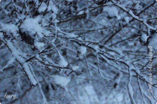 Эх,вот и наступила долгожданная зима!!! Снег застал врасплох...после дождей и слякоти наступила самая настоящая сказка)))) фото 7