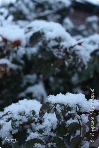 Эх,вот и наступила долгожданная зима!!! Снег застал врасплох...после дождей и слякоти наступила самая настоящая сказка)))) фото 10