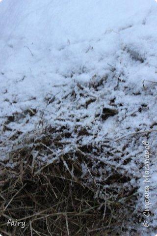 Эх,вот и наступила долгожданная зима!!! Снег застал врасплох...после дождей и слякоти наступила самая настоящая сказка)))) фото 13