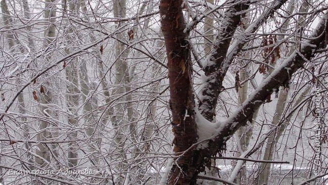 Урал попал в циклон ,морозы немного спали . Пейзажи в центе города сказочные, утром было -23. Не удержалась, чтобы не взять фотоаппарат в руки и не запечатлеть красоту за окном и солнышко в дымке морозной занавеси. Сразу в памяти сплывает добрая сказка  из детства (Морозко-1964 года)   фото 7