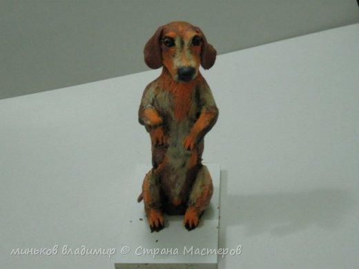 собака  сидит на задних лапах фото 2
