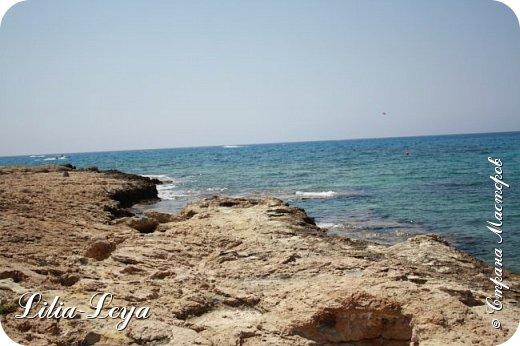 Оно - это лето, а там - это островное государство Кипр с населением менее  полутора миллиона человек.  То ли мне радоваться, то ли нет, но в этом году я обеднела ровно на две мечты!  Наконец-то я в живую увидела удивительное дерево БАНЬЯН ) До встречи с ним знала, что ореол его обитания - побережье Индийского океана. А тут... Средиземное море. фото 12