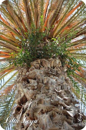 Оно - это лето, а там - это островное государство Кипр с населением менее  полутора миллиона человек.  То ли мне радоваться, то ли нет, но в этом году я обеднела ровно на две мечты!  Наконец-то я в живую увидела удивительное дерево БАНЬЯН ) До встречи с ним знала, что ореол его обитания - побережье Индийского океана. А тут... Средиземное море. фото 30