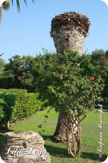 Оно - это лето, а там - это островное государство Кипр с населением менее  полутора миллиона человек.  То ли мне радоваться, то ли нет, но в этом году я обеднела ровно на две мечты!  Наконец-то я в живую увидела удивительное дерево БАНЬЯН ) До встречи с ним знала, что ореол его обитания - побережье Индийского океана. А тут... Средиземное море. фото 39