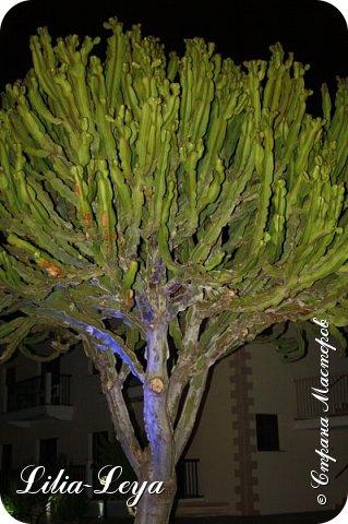 Оно - это лето, а там - это островное государство Кипр с населением менее  полутора миллиона человек.  То ли мне радоваться, то ли нет, но в этом году я обеднела ровно на две мечты!  Наконец-то я в живую увидела удивительное дерево БАНЬЯН ) До встречи с ним знала, что ореол его обитания - побережье Индийского океана. А тут... Средиземное море. фото 58