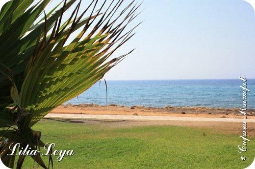 Оно - это лето, а там - это островное государство Кипр с населением менее  полутора миллиона человек.  То ли мне радоваться, то ли нет, но в этом году я обеднела ровно на две мечты!  Наконец-то я в живую увидела удивительное дерево БАНЬЯН ) До встречи с ним знала, что ореол его обитания - побережье Индийского океана. А тут... Средиземное море. фото 64