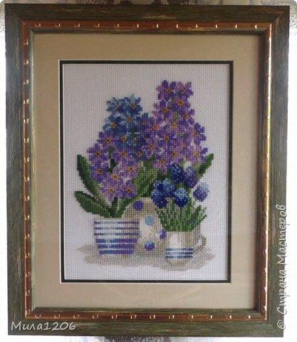 Гиацинты.Красивые цветы. фото 1