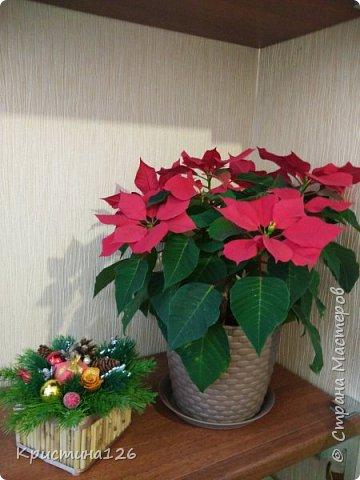 Решила сделать в подарок подружке на рабочий стол Новогоднюю композицию фото 4